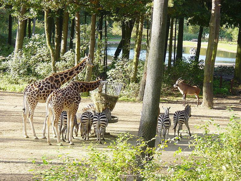 Burgers Zoo in Arnheim, Gelderland