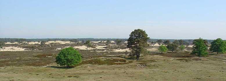 Der Nationalpark Drents-Friese Wold