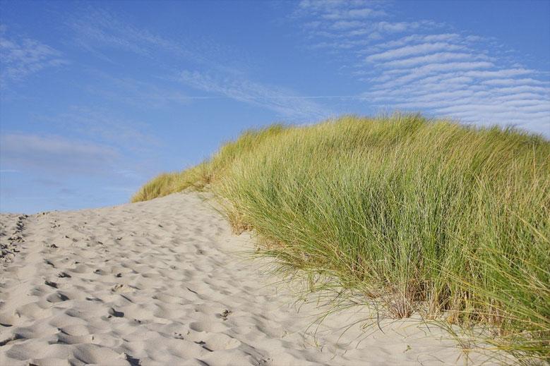 Dünenlandschaft an der Nordsee, Holland