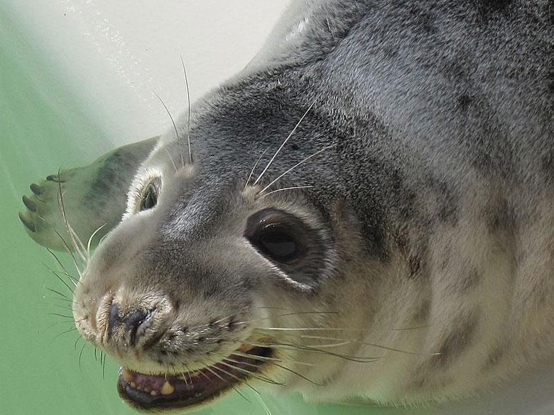 Vogel- u. Seehundeauffangstation Ecomare auf Texel