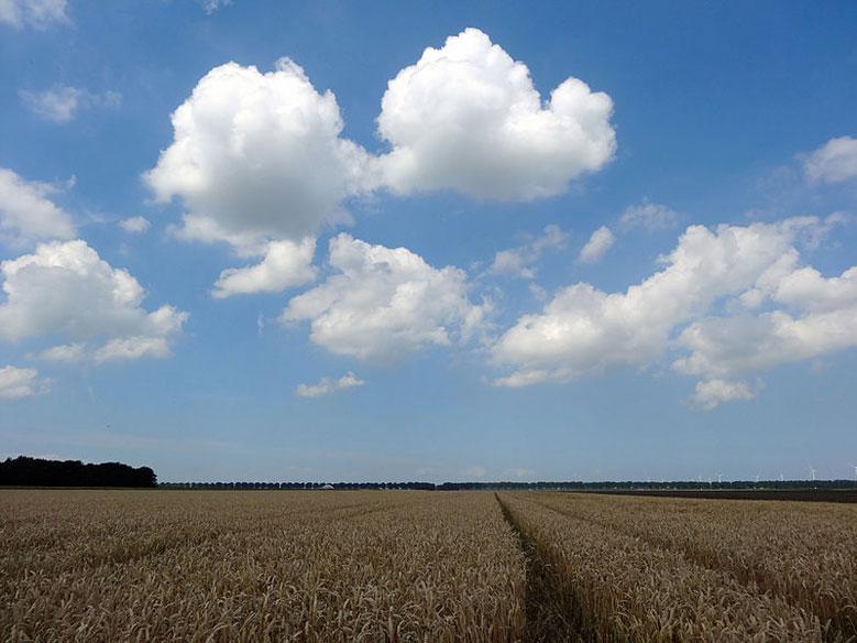 Landschaft von Süd-Flevoland