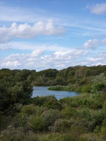 Naturschutzgebiet Meijendel bei Wassenaar, Südholland