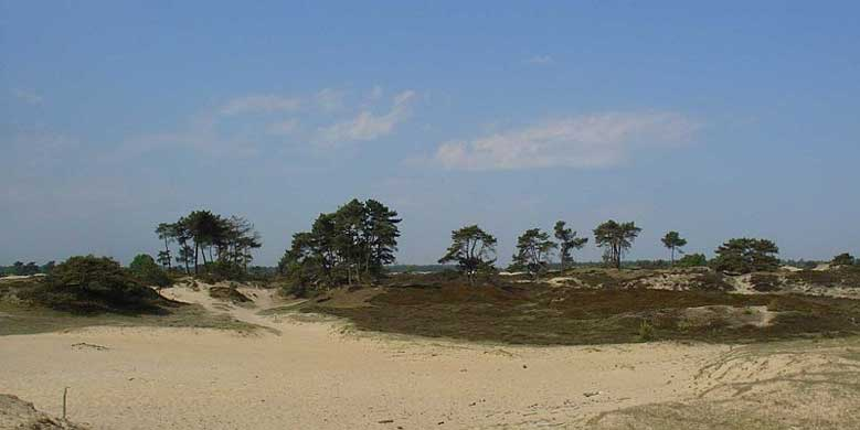 Nationalpark Drents-Friese Wold