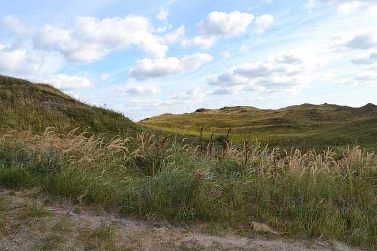 Dünenlandschaft in Nordholland