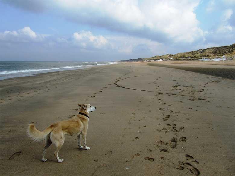 Hund auf einsamen Sandstrand